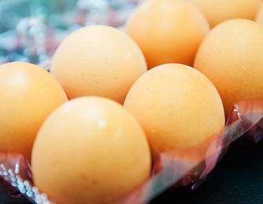 ZEROで育った鶏の卵