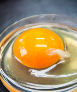 卵黄がプリプリ