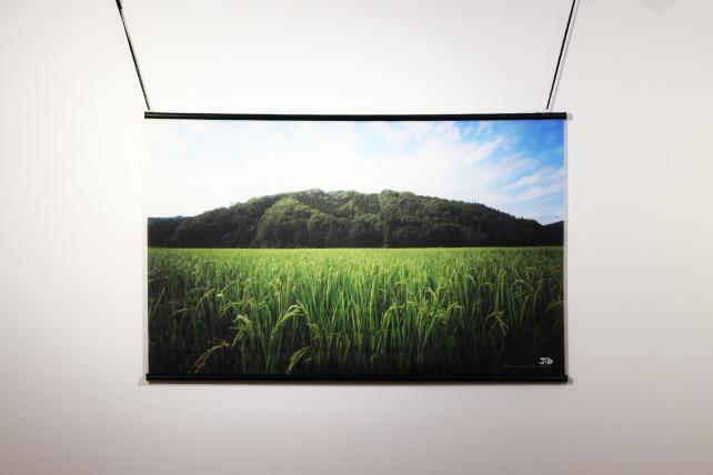 プロジェクターに映る田んぼの稲