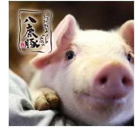 八鹿畜産 養豚部