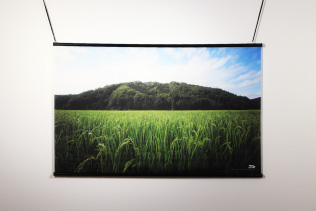 スクリーンに映る稲